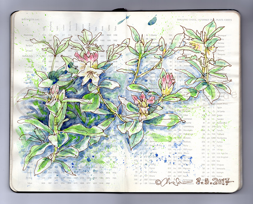 Rhododedron garten skizze zeichnung img20170503 20402776 - Garten zeichnung ...